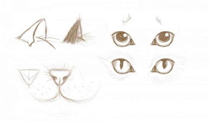 Как нарисовать красивую кошку - Мастер-классы - Для художников