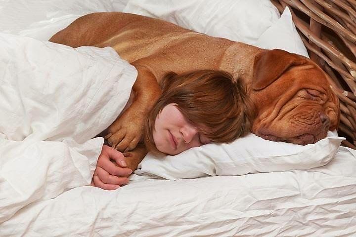 Сонник большая собака для незамужней