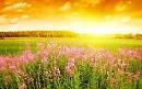HD Картинка Летний день, иванчай природа, пейзажи, лето, цветы, Природа 800x600.