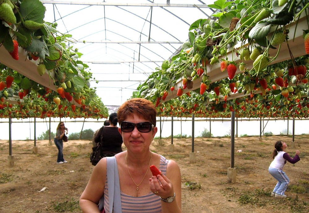Бизнес план на выращивание клубники 48