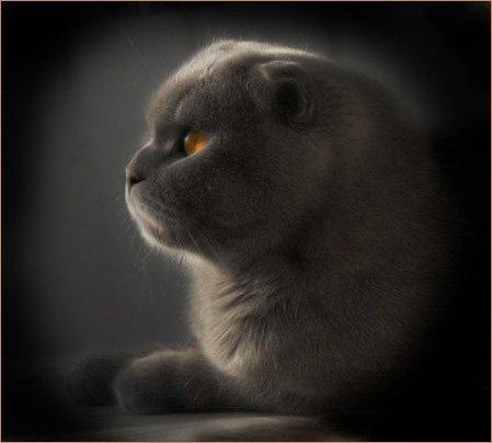 Кошки кошки 2 мои рисунки и фотки