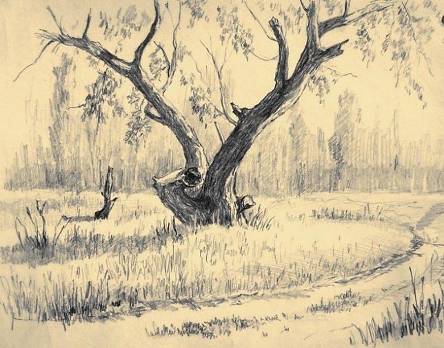 Рисовать набросок дерева карандашом