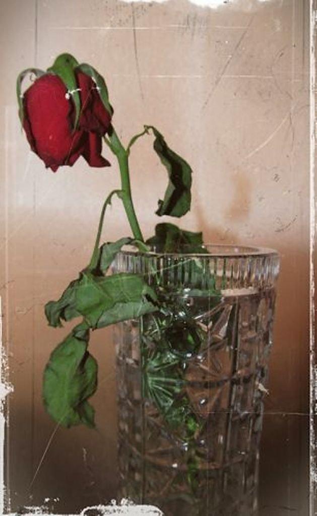 Как сделать что бы цветок не завял