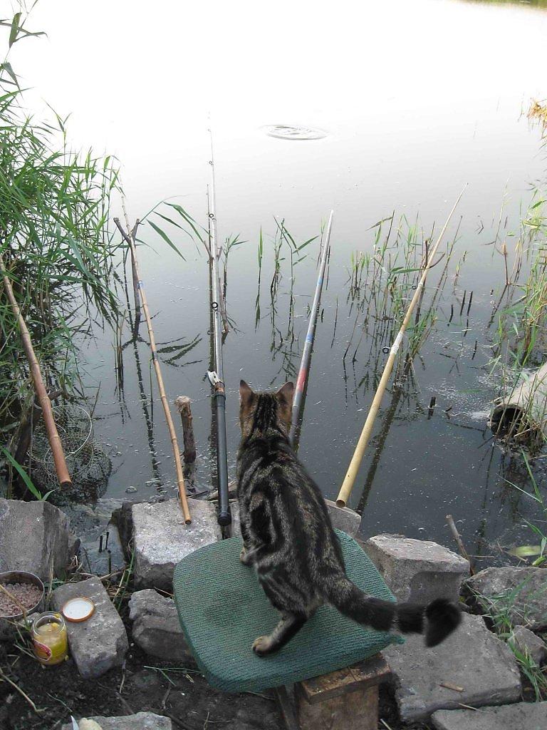кот матроскин на рыбалке