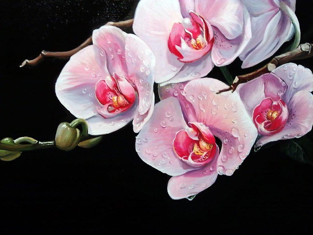 ... по запросу Орхидея Рисунок Маслом: rus-img.com/orhideya-risunok-maslom