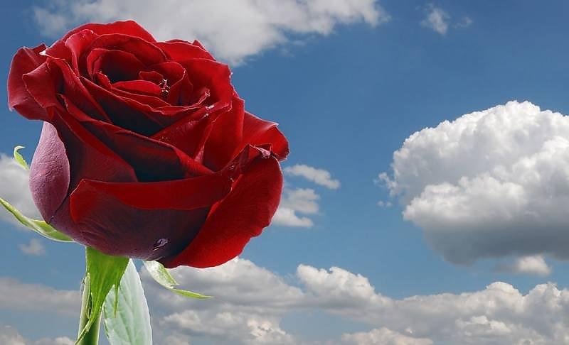 Снится покойник дарит цветы