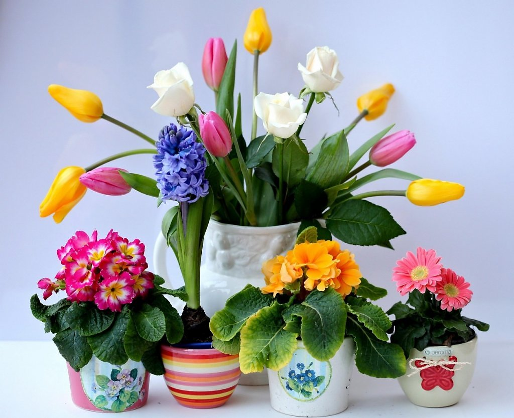 Цветы в вазе фото картинки 4