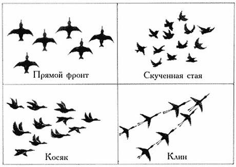 Произведение Про Птиц И Их Авторы
