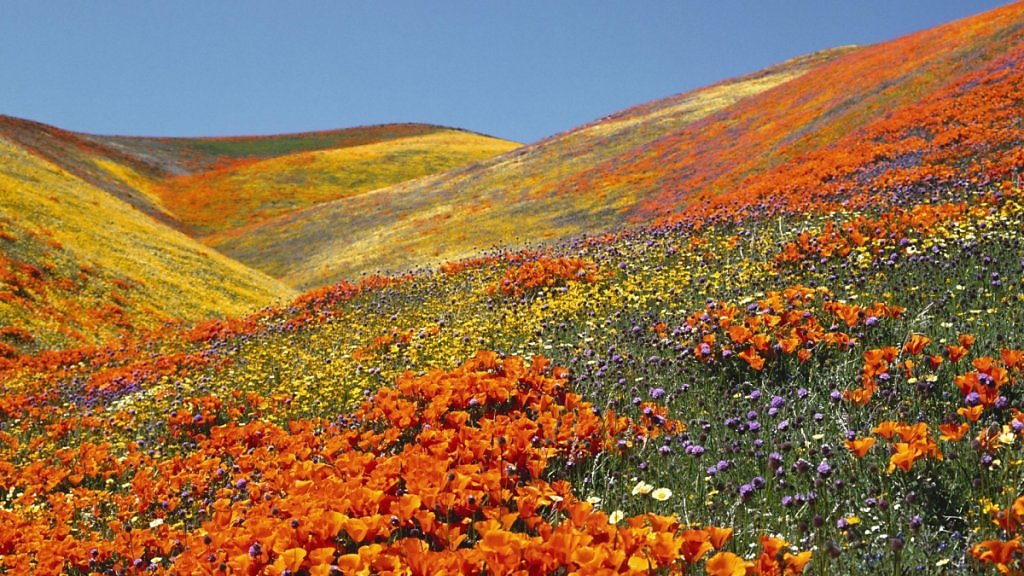 Долина цветов картинки 4