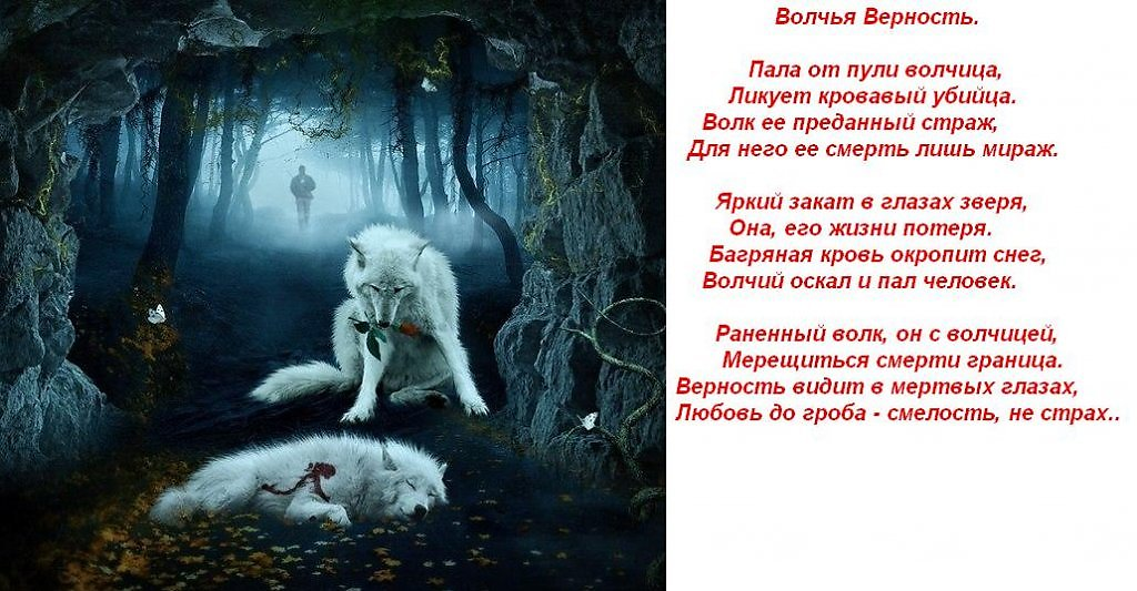 Re: картинки с волками