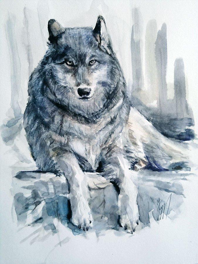 Картинки нарисованные волк