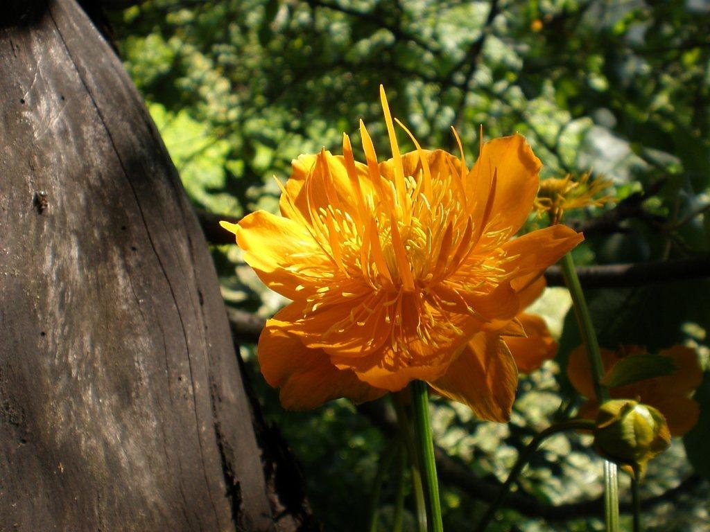 Фото цветов из троллей