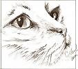 Картинки для срисовки смешные котики гелевой ручкой, добрым