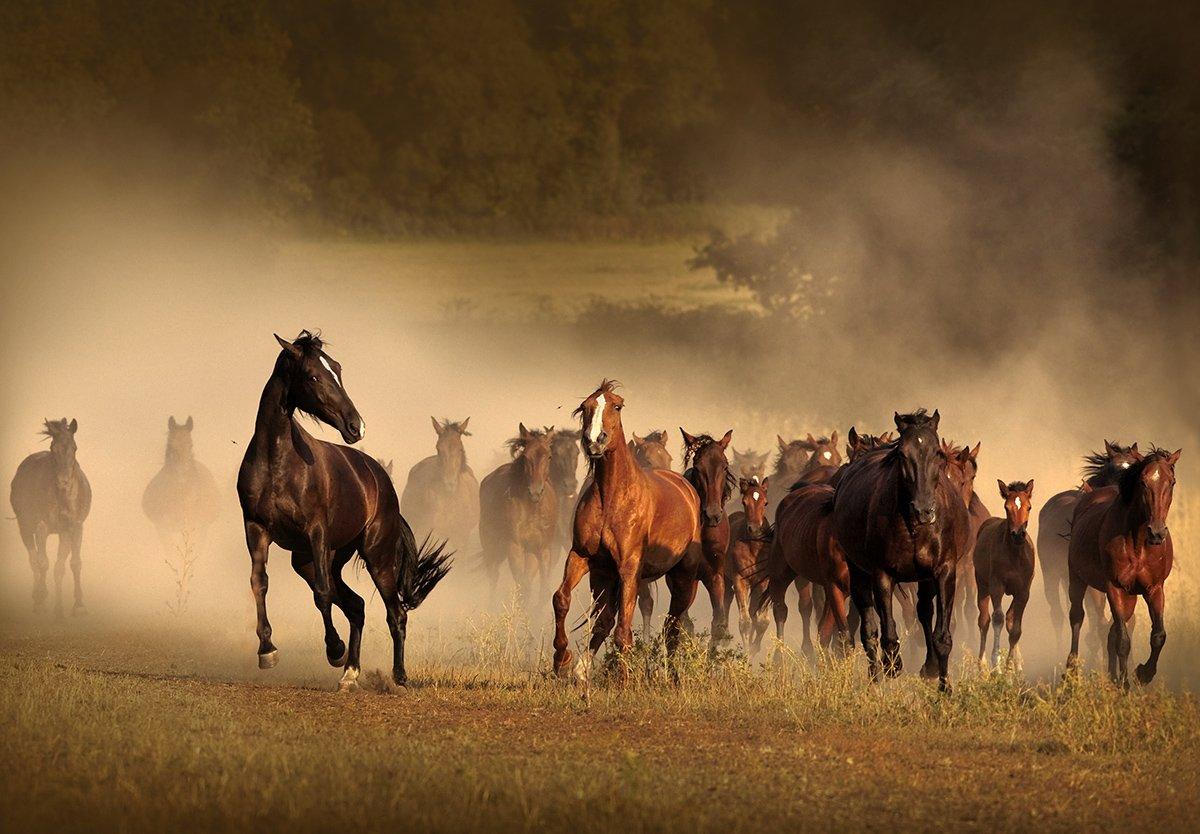 данном а кони все бегут картинки фигуру можно только