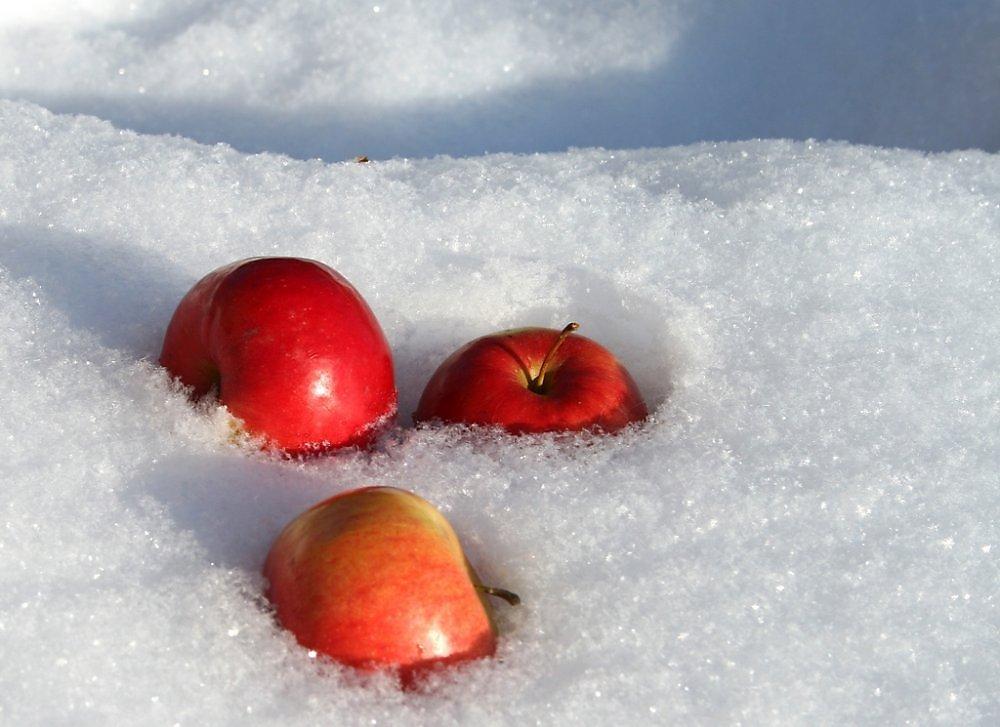 часы яблоки на снегу самая красивая картинка выпьет забудет веселье