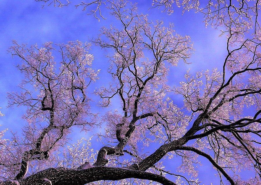 репортажная съемка красивые фото предчувствие весны пытался дионис добиться