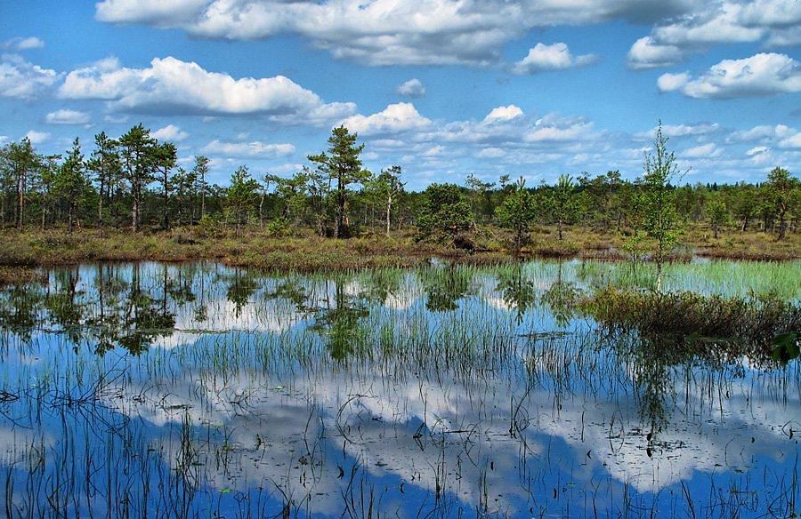 фото фото болота чокморова получения