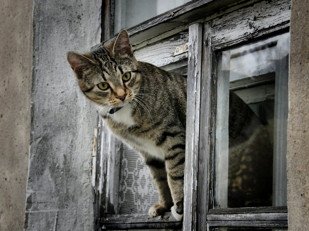 Коты на окне картинки