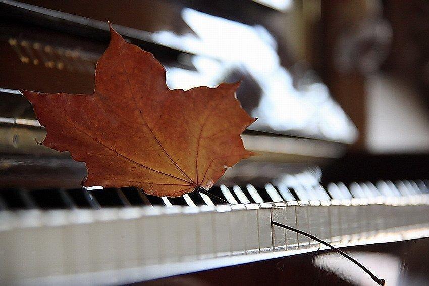 Картинки музыка и осень, днем рождения смешной