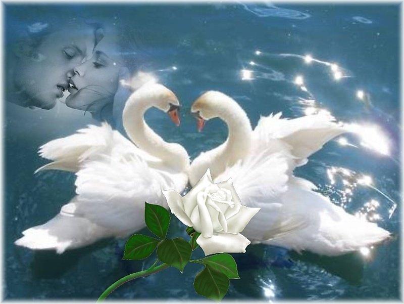 Лебеди гифки счастья вашей семье