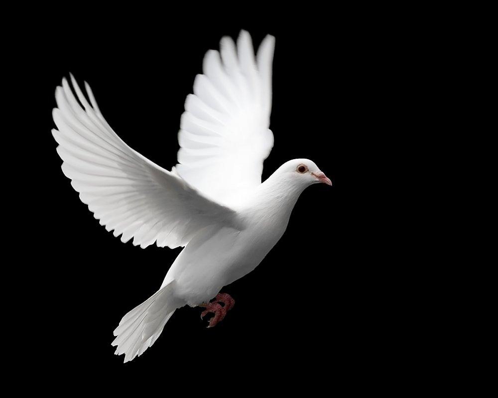 Белые птицы открытки, воскресение