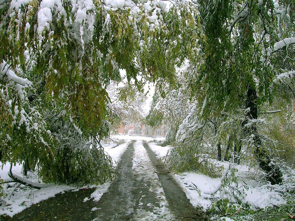 Красивые картинки с наступлением зимы
