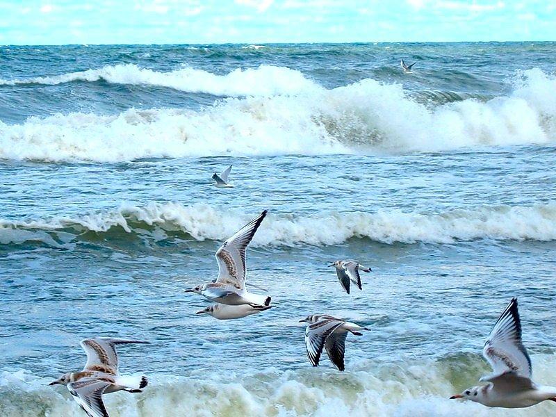 Гифка море чайки волны