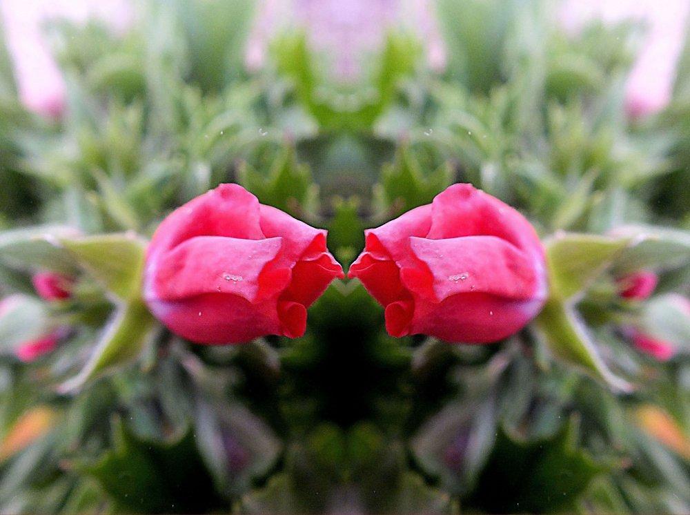 Открытка, открытки цветы поцелуи
