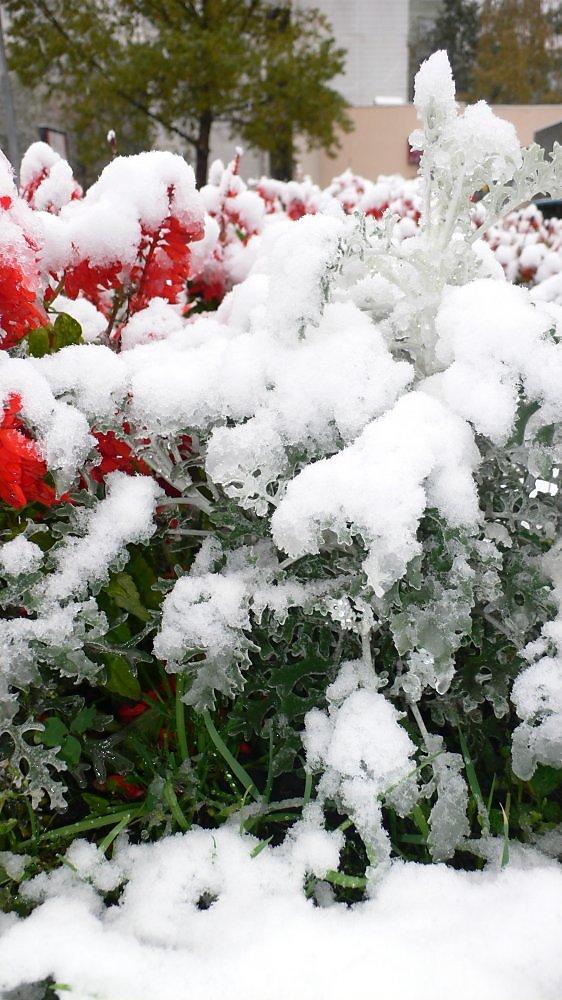 с майским снегом картинки гиф кошек