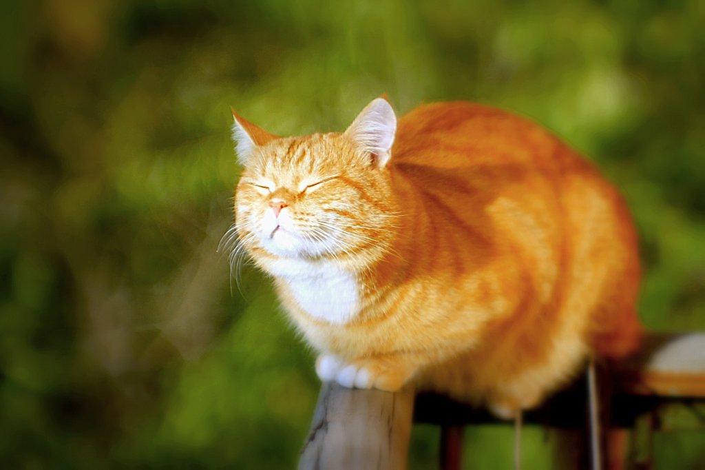 Кот жмурится картинка