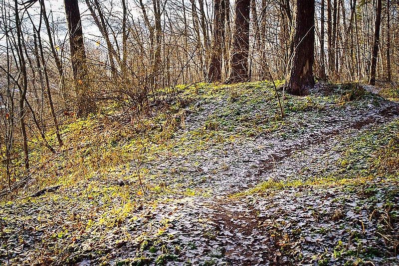 Поздняя осень в лесу - ноябрь... - Плэйкасты - Флора и ...