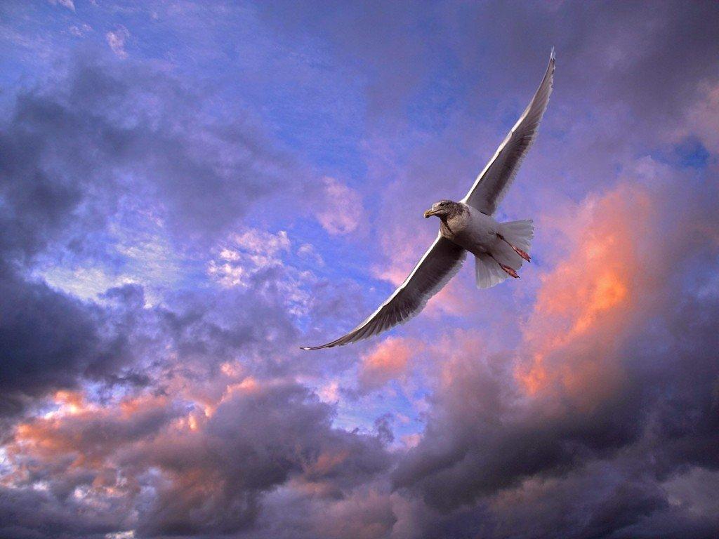 Красивая птица в небе картинки