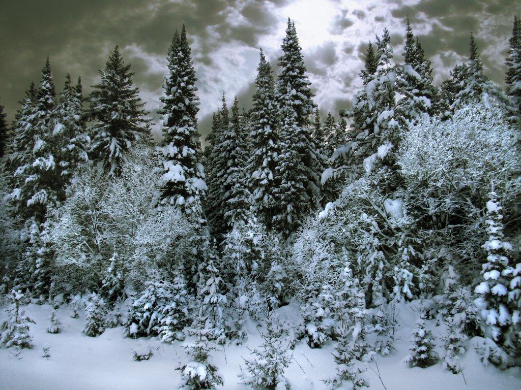 Картинки тайга зимой