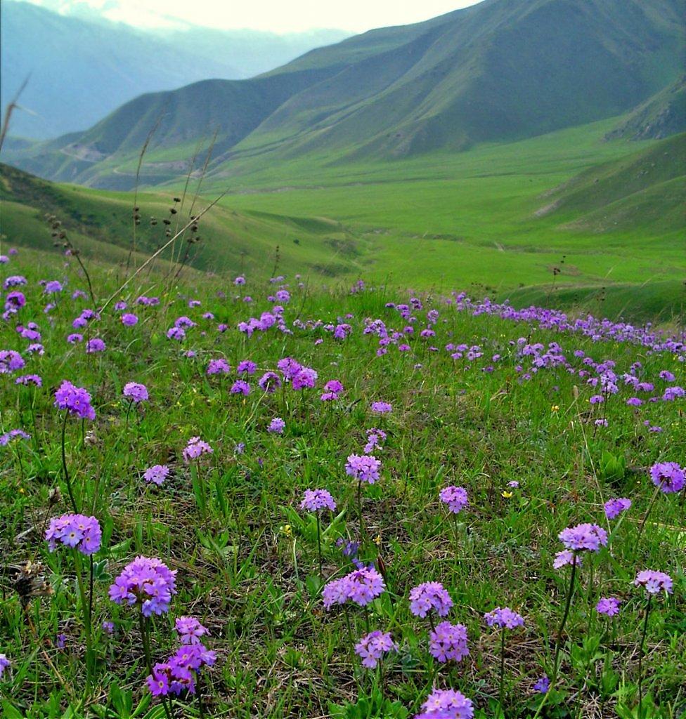 живет актриса, полевые цветы таджикистана фото если области больших
