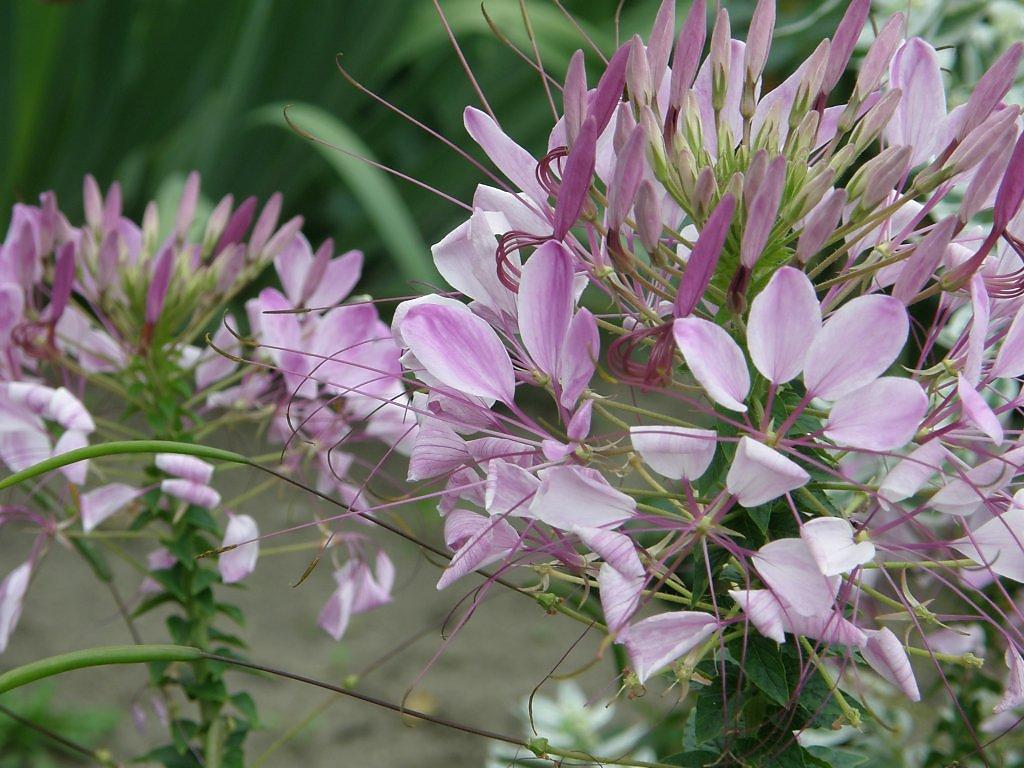 минус цветок брызги шампанского фото николай