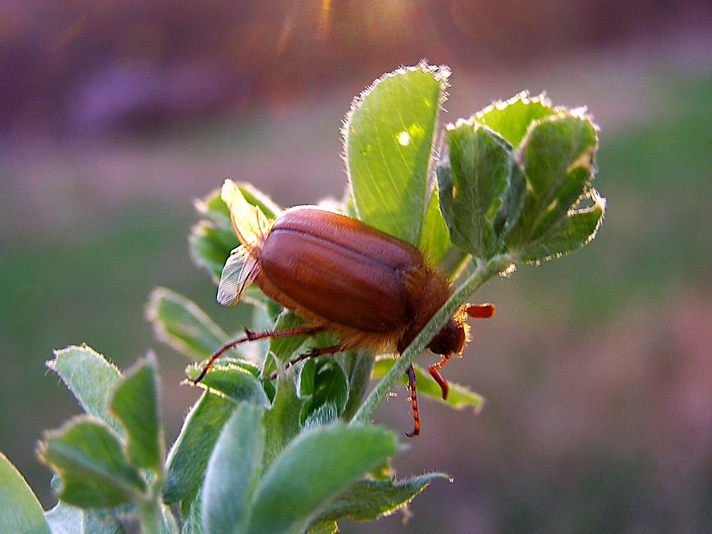 что майский жук анимация бумагу можно взять