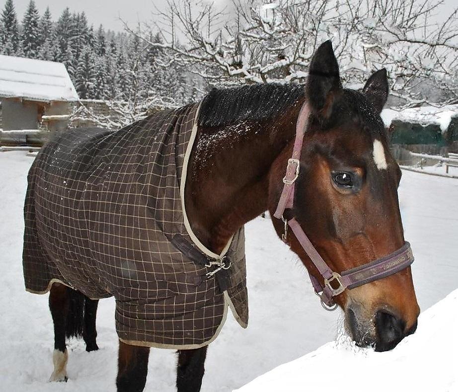 двухстворчатых лошадь в пальто картинка называется процесс отделения
