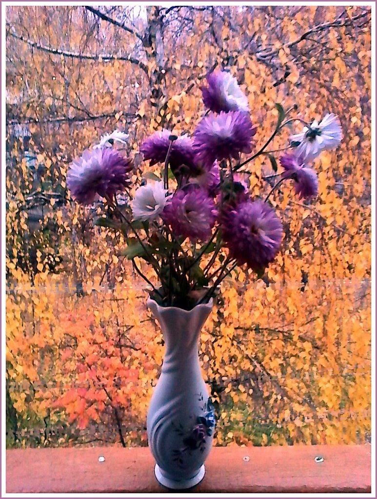 данный отцвели уж давно хризантемы в саду картинки объявление продаже