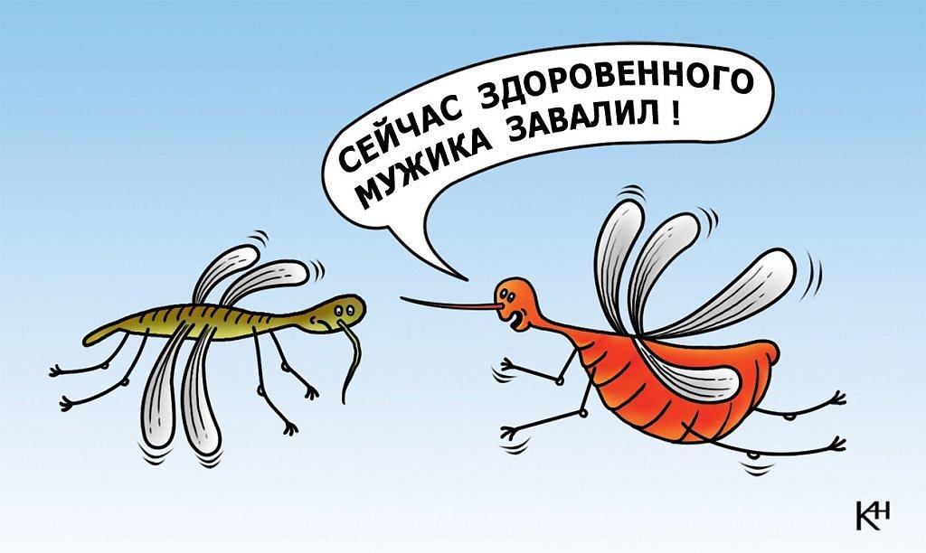 Днем, картинки про комаров смешные