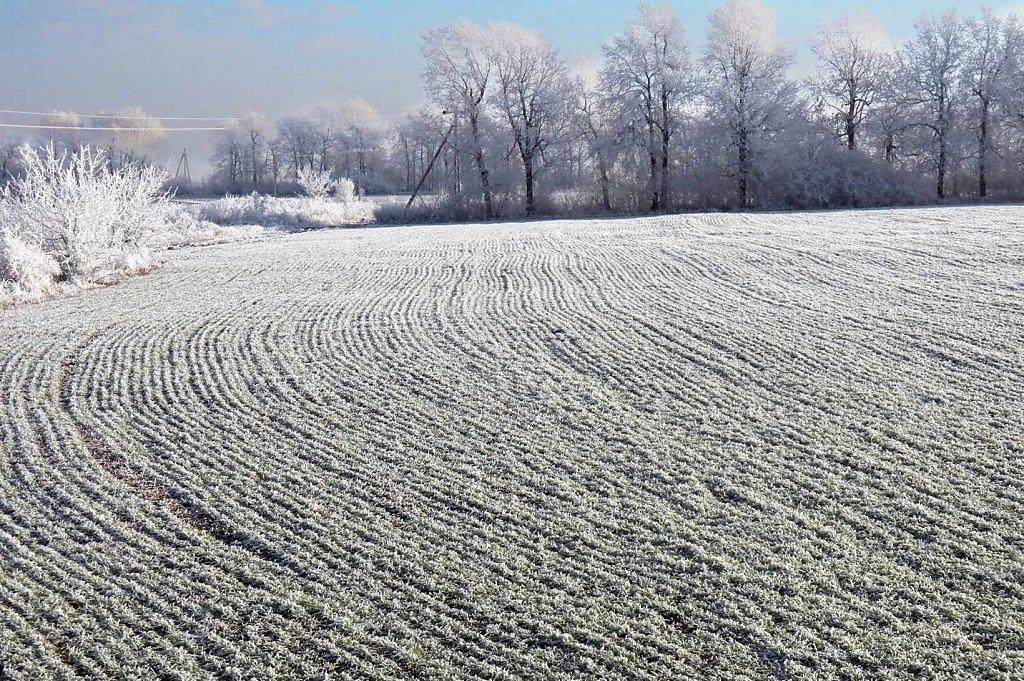 поля зимой фотографии