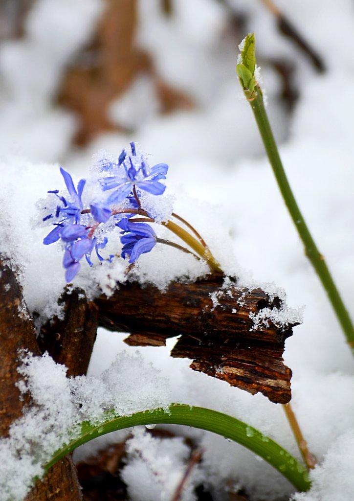 Картинки снег февраль март весны