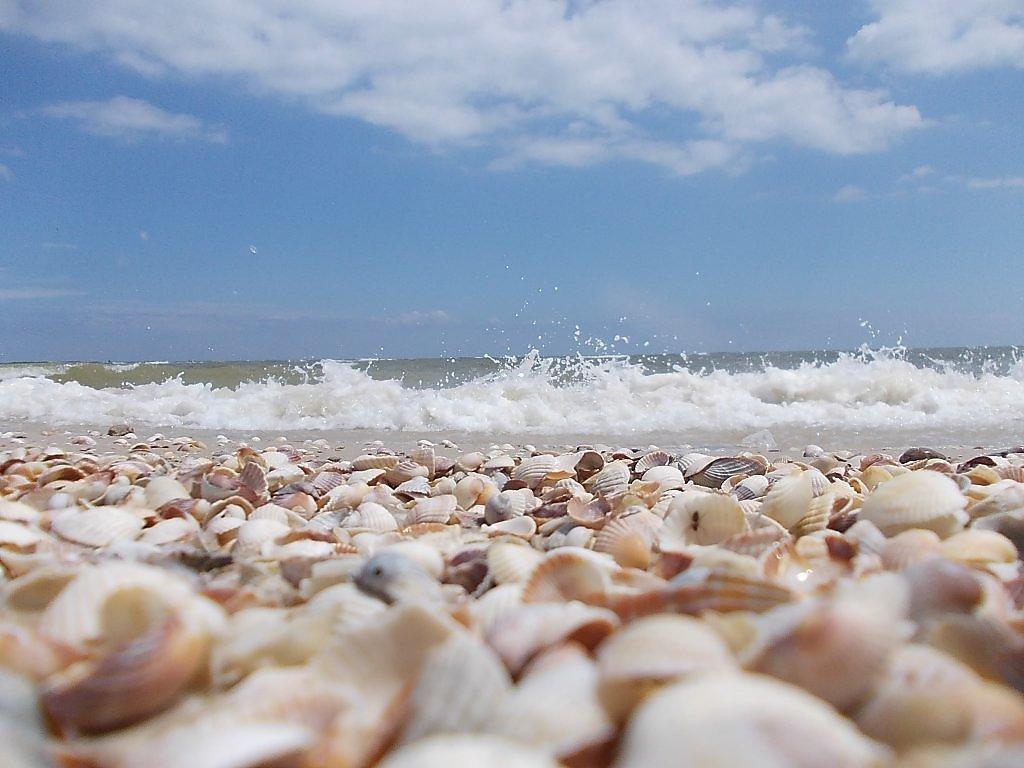 поражают черное море ракушечный пляж фото снимок