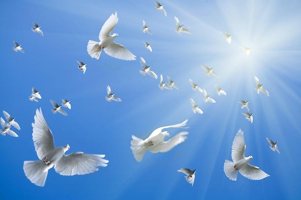 Картинка с голубем в небе