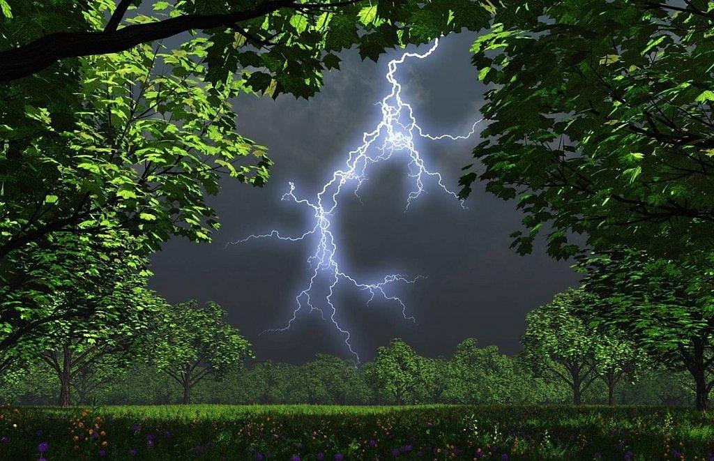 картинка гроза в лесу гарантировано