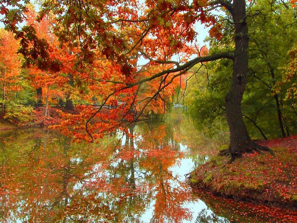 Осень пришла картинки красивые