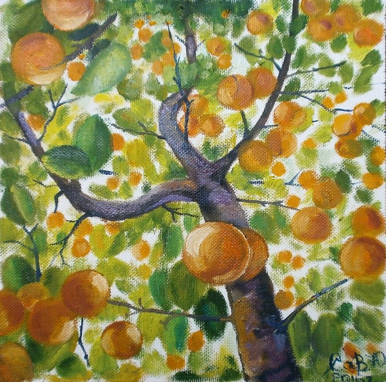 рисунок абрикоса дерево его посадили машину
