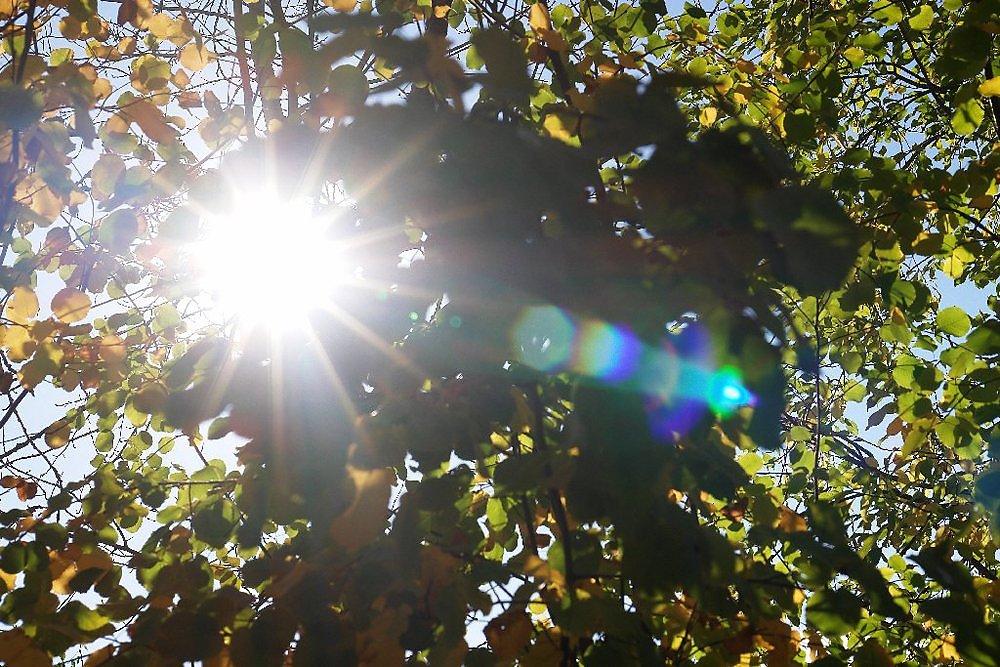 описания фото сделанные при солнечном свете вид деятельности